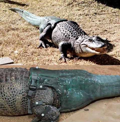 krokodil-staart-prothese
