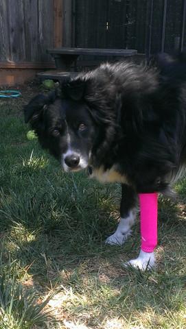 Compressie brace voor hond
