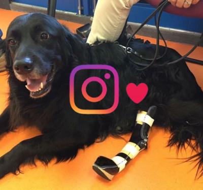 instagram kamer dierenorthopedie amsterdam