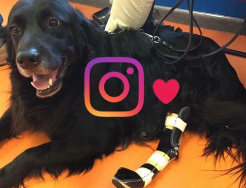 Instagram en onze patientjes