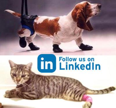 LinkedIn Kamer Dieren Orthopedie