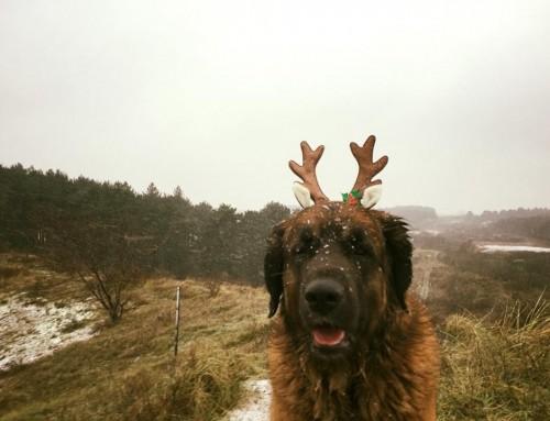 Openingstijden tussen Kerst / Oud en Nieuw Periode 2018