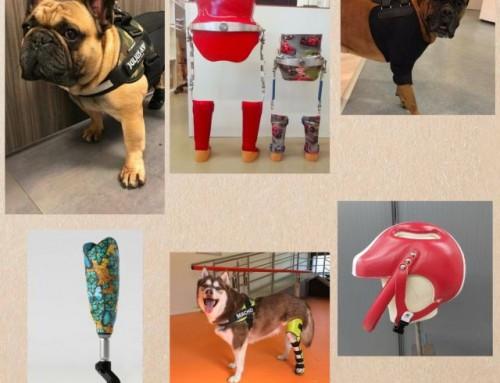 Vacature: Orthopedisch technicus of technoloog met affiniteit met dieren m/v